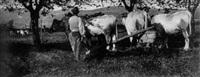ploughing team by james craig annan