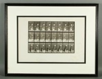 lady playing tennis, plate #297 (from animal locomotion series) by eadweard muybridge