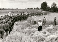 german war prisoners walking past harvesting peasants by mikhail trachman