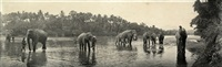 elephants bathing with their keepers, ceylon by a.w. plate (co.)