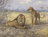 löwenpaar bei einem dornenstrauch in der savanne by friedrich reimann