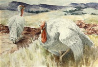 white turkeys by russell cowles