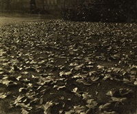 fallen leaves by jean-marie auradon