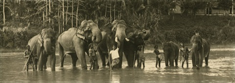 elephants bathing with their keepers by aw plate co