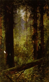 light falling in the redwoods by jules tavernier