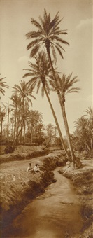 palm grove in an oasis by lehnert & landrock