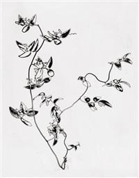 solarized flowers by paul heisman