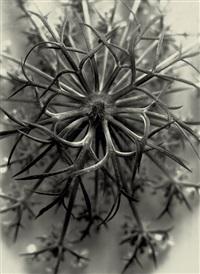 plant study by franz fiedler