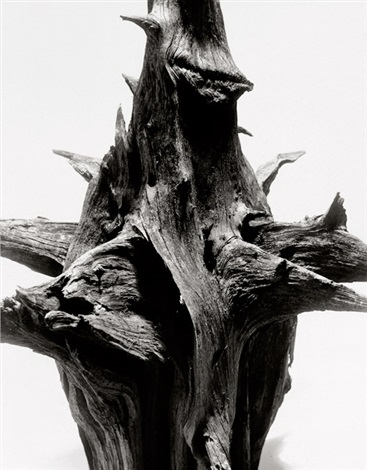 study of driftwood by andreas feininger