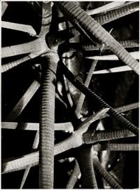 cactaceae echinocactus by ernst fuhrmann
