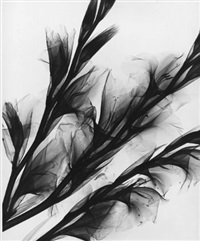 gladioluses (+ iris lillies; 2 works) by herbert w. franke