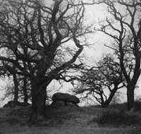 oak trees in landscape by karl freytag