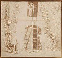 the ladder by william henry fox talbot