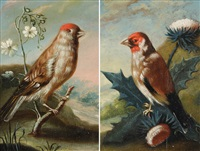 distelzeisig (+ birkenzeisig; pair) by johann adalbert angermayer