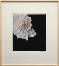 shell by joyce tenneson