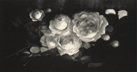 white roses by alice coutts