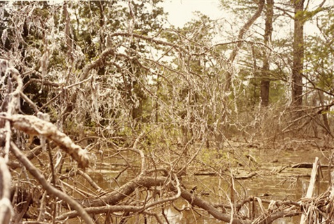 untitled swamp by william eggleston