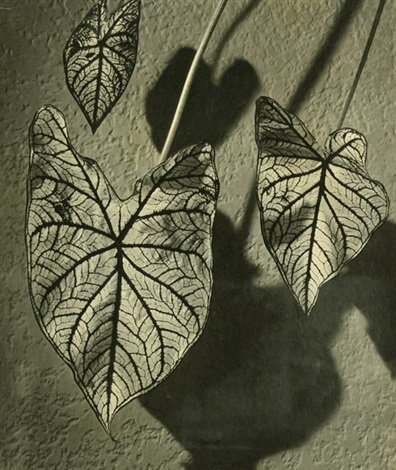 pattern leaf study by hans kaden