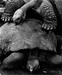 galápagos, ecuador by gebhard krewitt