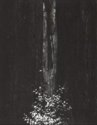 tree by oliver gagliani