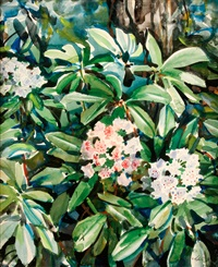 mountain laurel by andrey avinoff