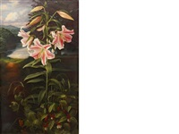 lilium pink glory by raymond booth