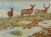 crest top mule deer by dwayne harty