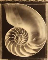nautilus shell and rose (2 works) by tom baril