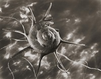 star shell, new york by ruth bernhard