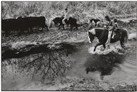 horse in the ditch, llanito, new mexico by danny lyon