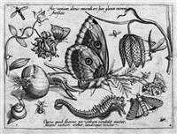 archetypa studiaque patris georghi hoefnagelii... (die folge der stilleben mit insekten, tieren, früchten und blumen in vier teilen) (52 works) (after georg hoefnagel) by jacob hoefnagel