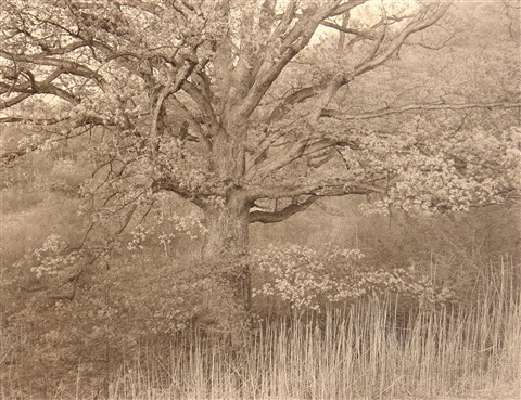 oak tree holmdel nj and evening fog jonesport maine 2 works by george tice