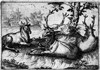 tiere (portfolio of 6) by balthasar laury