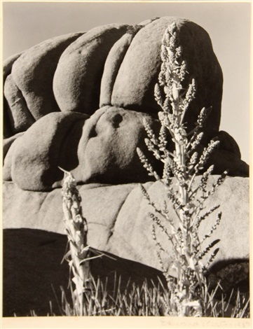yucca wonderland of rocks by edward weston