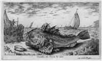 diverses especes des poissons de mer by albert flamen