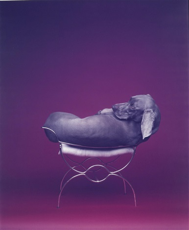 seated burner by william wegman