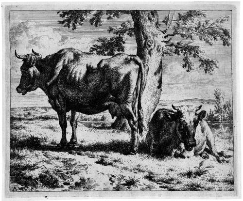 zwei kühe unter einem baum from kühe und schafe by adriaen van de velde