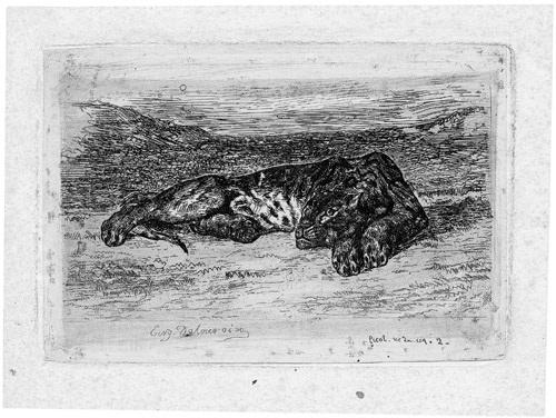 liegender löwe in der wüste by eugène delacroix