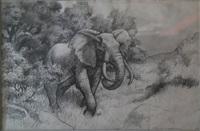 elefante by axel amuchastegui