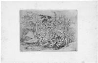 angélique sauvage et roseaux (wilder engelwurz und schilfrohr mit felsen bei einem bach) (from portfolio of 6) by eugene blery