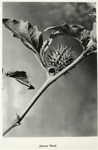 art forms in plant structure, a series of original photographs of plant material from nature's own art gallery (bk w/ 98 works, 4to) by ray jerome nelson