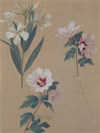 studienblatt mit hibiskusblüten by adolf (carl) senff