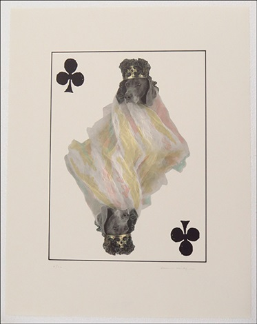 royal flush clubs from souvenir playing cards series 5 works by william wegman