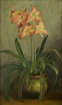 amaryllis by blanche lazzell