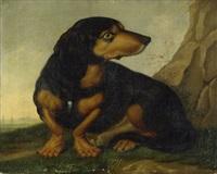 porträt eines kurzhaardackels in freier natur by joseph günther