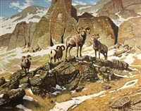 four bighorn rams by terry bateman
