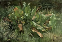 wiesenstück mit sauerampfer by friedrich arnold