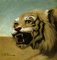 tiger vor sandwüste by john w. perrin