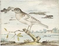 witte mosch (study) by pieter holsteyn the elder