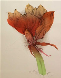 3 bl. farblithogr. mit amaryllisblüten bei mathieu by bruno bruni